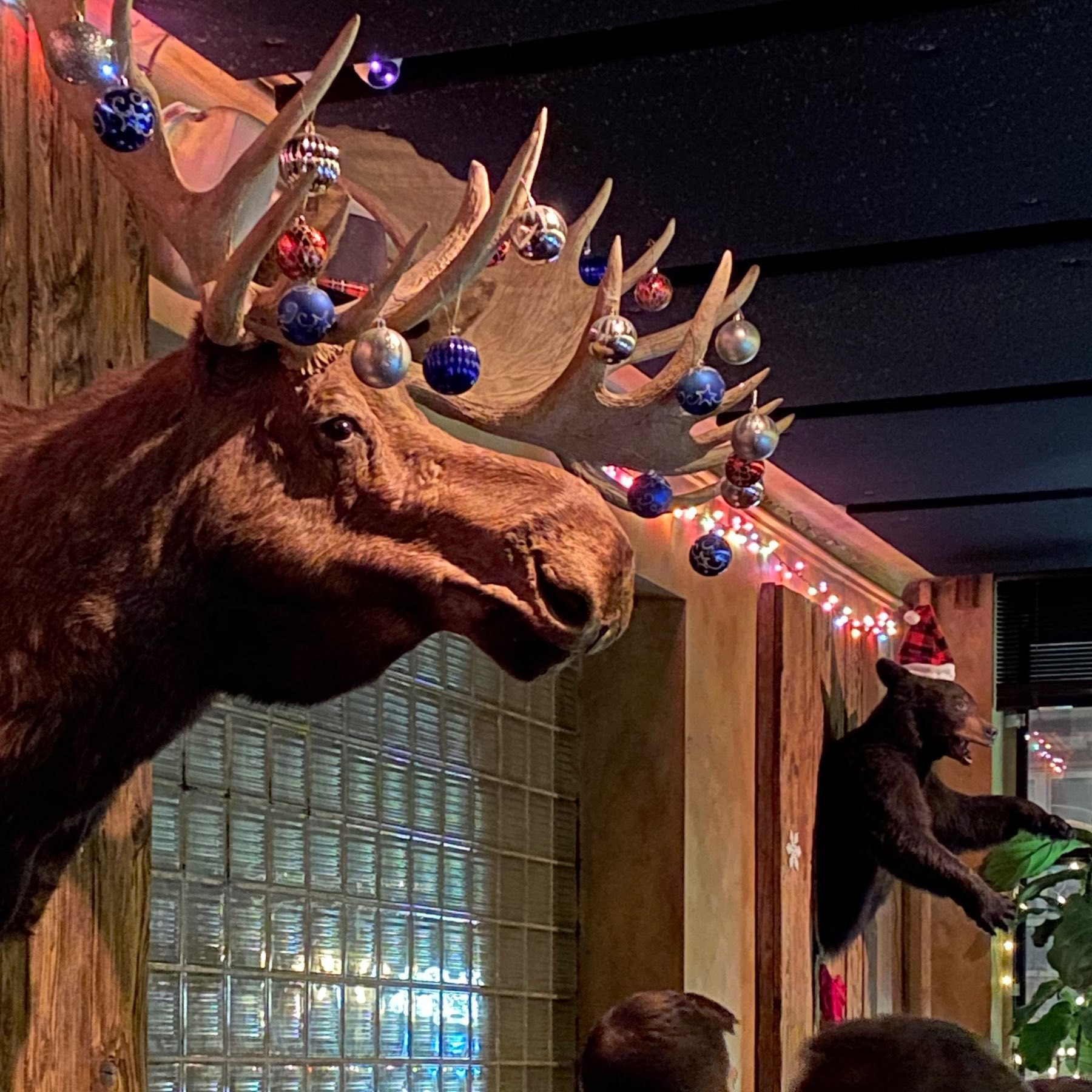 Large moose head mounted on a bar wall with christmas ornaments hanging from antlers
