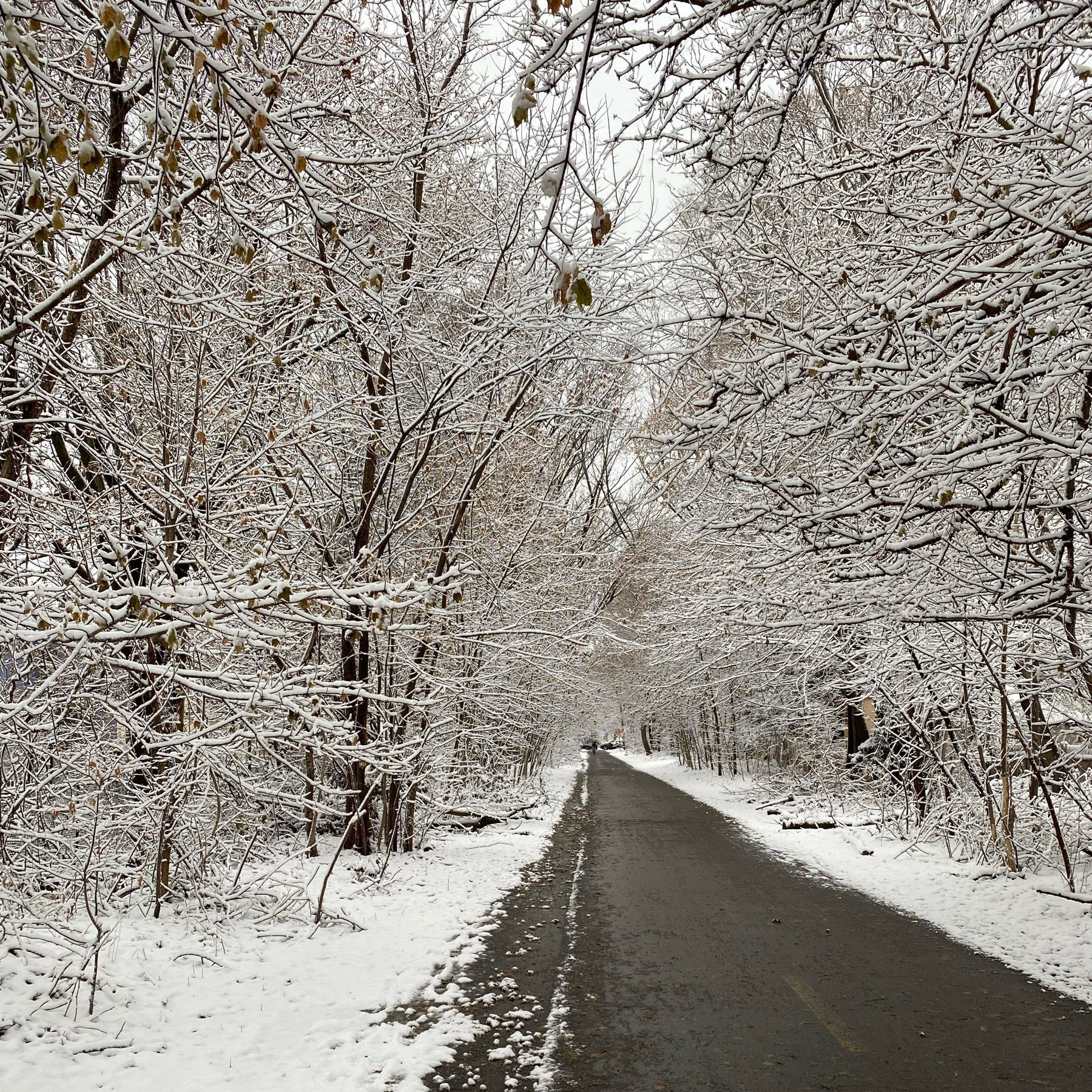 snow covered winter trees surrounding a long paved bikeway