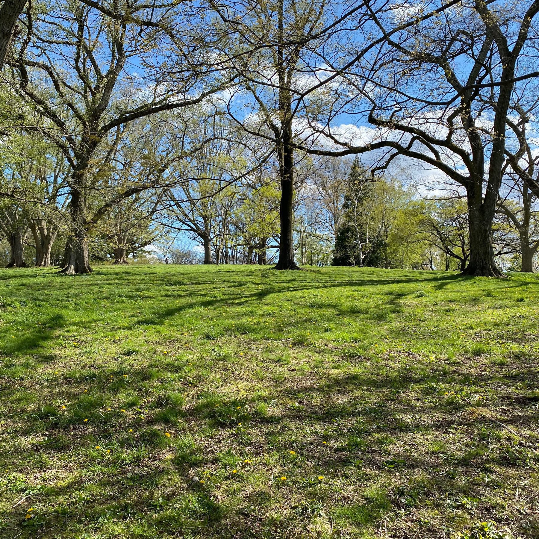 picture of a grassy hill with trees and a blue sky behind